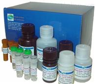 小鼠組胺檢測試劑盒